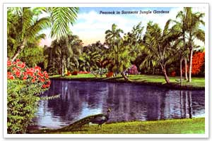 Sarasota Jungle Gardens Sarasota History Alive